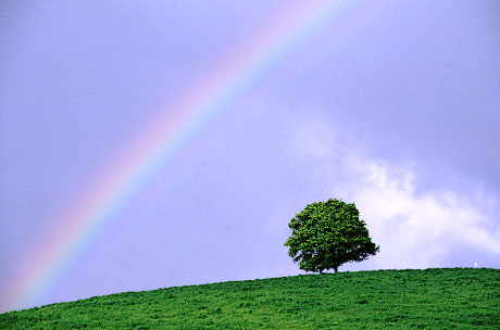 rainbow in hokkaido.jpg